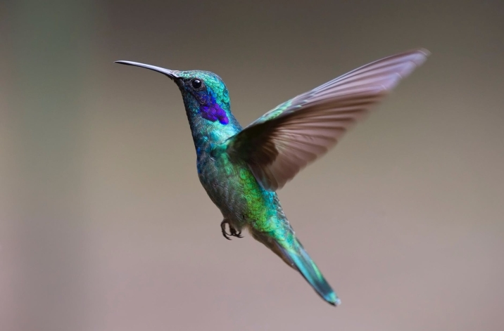 hummingbird-bird-birds-349758